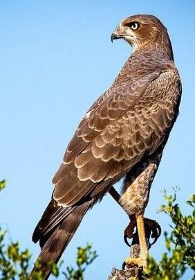 bird-of-prey-1544985_640.jpg